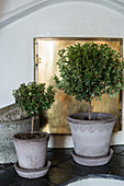 Two small potted trees on saucers in front of gilt stove door