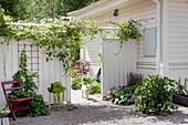 Hund geht durchs Gartentor eines bewachsenen Sichtschutzzauns