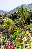 Exotischer Steingarten mit Kakteen und Sukkulenten