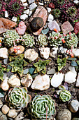 Rock garden with succulents and pebbles arranged in rows