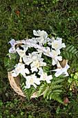 weiße Rosen und Farn in einem mit weißem Band umwickelten Körbchen