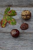 Kastanie, Kastanienblatt und Kastanienschale auf Holzuntergrund
