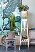 Cactus and money tree on wooden plant stands in front of painted tiles