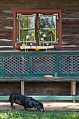 Reagenzgläser mit Herbstblumen und Teelichter in Birkenast als Dekoration vor dem Fenster