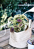 Colored nettle in a fabric bag