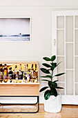 Minibar next to houseplant (ficus)