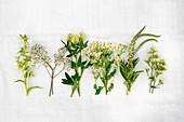 Various white summer flowers (incl. clover, gypsophila, chamomile, valerian)
