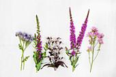 Verschiedene lilafarbene Sommerblumen, ua. Bienenfreund (Phacelia)