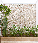 Plants in rectangular pond against stone wall and house wall