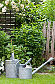 Two zinc watering can in idyllic summer garden with old wooden fence