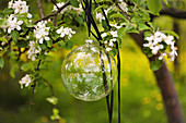 Glass sphere hung in flowering cherry tree