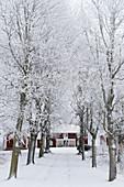 Allee mit verschneiten Bäumen zu einem roten Schwedenhaus