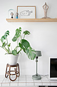 Swiss cheese plant on rattan stool on tiled sideboard