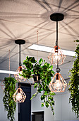 Pendant lamps and plants in hanging baskets in work lounge