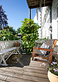 Wooden benches and grape vine on balcony