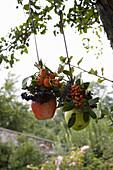 Hanging arrangements of apples and berries