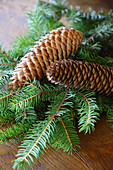 Conifer branches and cones