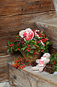 Festive arrangement of Gaultheria