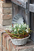Basket of snowdrops decorated with twigs