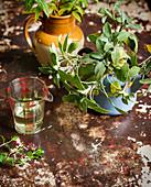 Salbei in Vintage Kanne gepflanzt