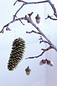 Wintry Christmas arrangement made from glittery pine cone and acorns hung from branch