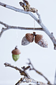 Acorns covered with glitter and hung from branch as wintry decorations