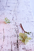 Wintry arrangement of flowers on white wooden surface