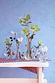 Wintry arrangement of cyclamens and hellebores in small glass vases