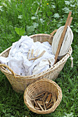 Basket of laundry hand-washed and bleached using traditional methods with washing line and basket of pegs