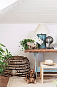 Dog lies in front of an old wooden table with ivy, table lamp and vintage decoration