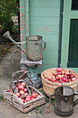 Baskets of pomegranates and metal watering cans