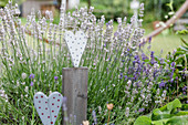 Wooden Heart As A Decoration In Front Of Lavender