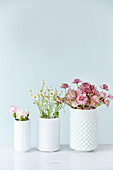 Three white vases of pinks, chamomile and astrantias