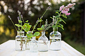 Flowering herbs in apothecary bottles on table in garden