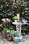 Pflanzen, Glasflaschen und Tisch vor mit Efeu bewachsener Mauer