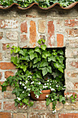Plants in niche in wall
