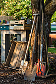 Garden Tools Leaning Against Tree Trunk And Wooden Boxes