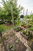 Vegetable Garden With Raised Beds, Apple Tree And Greenhouse