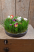 Miniature spring meadow of flowers and wheatgrass in bowl