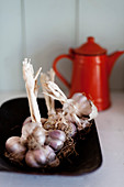 Garlic on black plate in front of red enamel coffee pot