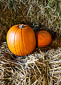 Orange pumpkins nestled in straw