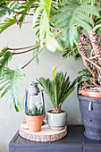 Houseplants in living room