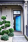 Thuja mit Formschnitt im Vorgarten zum Haus mit offener blauen Tür