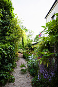 Gravel path through lush green garden