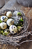 Easter Nest With Quail Eggs And Feather