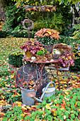 Autumn Arrangement With Chrysanthemum And Perennials In The Garden