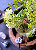 Seed Of Fennel With Hydrangea Blossom