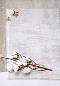Cotton (Gossypium herbaceum)