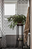 Christmas cactus on plant stand in bathroom