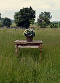 Margeriten im Korb auf altem Holztisch auf der Wiese